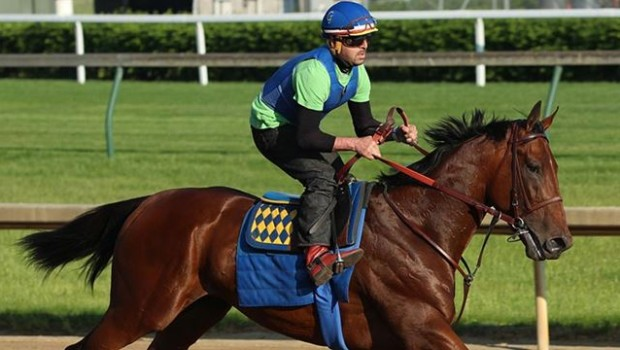 Triple Crown Hopeful American Pharoah has a Tale (Tail) To tell