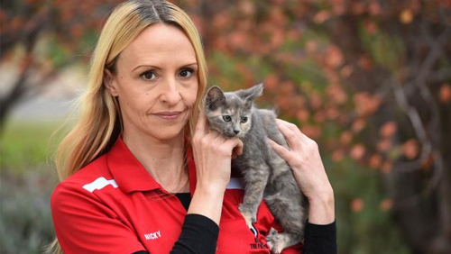 Aussie cat shelter loses license over alleged link to online gambling