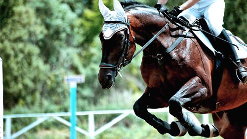 Matchbook Becomes Next British Horseracing Authorised Betting Partner