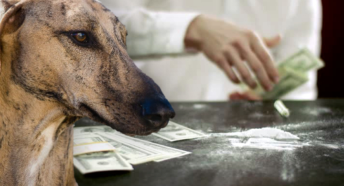 Florida's greyhound racing biz now a pharmaceutical free-for-all