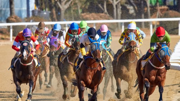 Poll: Fatalities, Drugs, and Integrity: Americans' Top Three Concerns for Horse Racing
